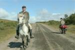 Исландская драма «О лошадях и людях» завоевала первый приз фестиваля Nordic Council Film