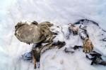 В Мексике нашли мумифицированные тела пропавших 56 лет назад альпинистов