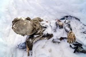 Одно из обнаруженных тел