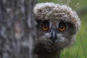 Дикая природа и естественная среда обитания находятся под защитой во всех 38 национальных парках Финляндии