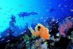 Австралия делает спасение Большого Барьерного Рифа своим главным приоритетом