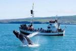 Исландия стала мировым лидером по соотношению туристов и местного населения