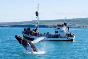 Туристы, наблюдающие за китами