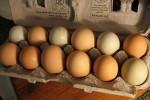 Употребление птичьих яиц снижает риск развития диабета 2 типа