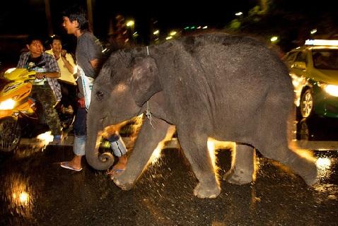 Слоненок на улице Бангкока