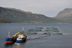 Рыбная ферма, Астафьорден, Норвегия