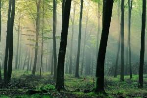 Датский лес