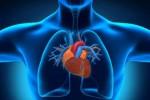 Ученые нашли связь между ишемической болезнью сердца и ростом