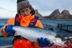 Германия стала крупнейшим импортером норвежского лосося