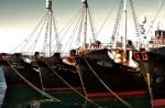 Исландские власти не собираются отступать от китобойного промысла