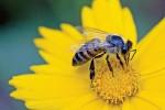 В Осло построили первое в мире «шоссе» для пчел