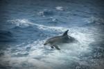 В шведские балтийские воды заплыл редкий дельфин