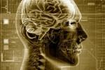 Новый цифровой атлас мозга поможет вовремя обнаружить болезнь Альцгеймера