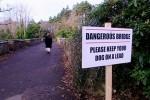 Зоологи ищут объяснение самоубийственным прыжкам собак с моста в Шотландии