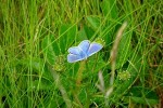 В Шотландию вернулся редкий вид бабочек