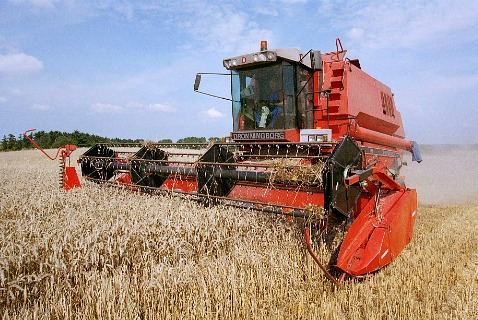 Сбор урожая пшеницы в Дании