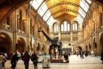 Британский музей перехитрил моль