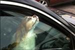 Британские ветеринары: «Не оставляйте свою собаку в машине!»
