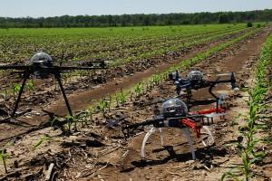 Дроны фиксируют состояние посевов (фото)