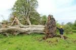 В Ирландии обнаружена жертва убийства 1000-летней давности
