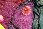 Норвежский фьорд покрыли миллионы кубометров фиолетовой слизи