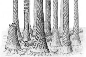 Реконструкция ископаемого леса, произраставшего на Шпицбергене 400 млн лет назад