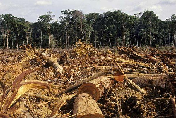 Бразильский лес, где когда-то было очень много-много диких обезьян