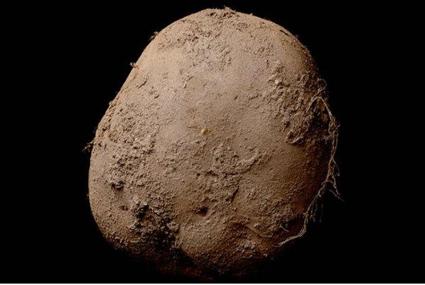 Фотография картофеля обыкновенного на миллион долларов