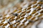 Финляндия запрещает продажу ароматизированных сигарет и сигарет с ментолом