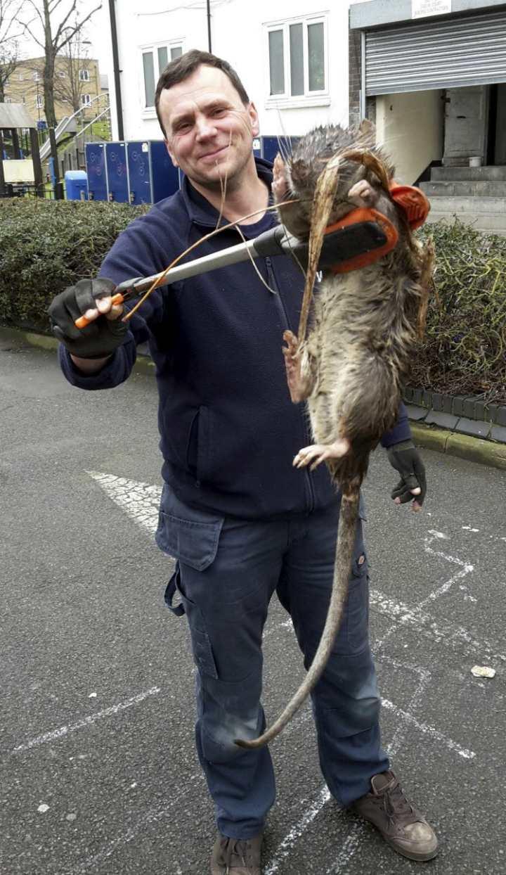 Тони Смит и гигантская крыса (Лондон)