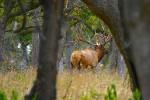 Норвежские охотники будут разыгрывать разрешения на отстрел лосей в лотерею