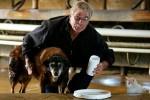 В Австралии скончалась самая старая собака в мире