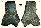 В Австралии найден самый древний каменный топор