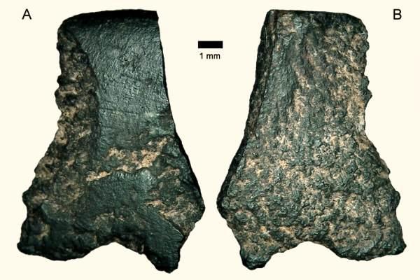 Самый старый каменный топор