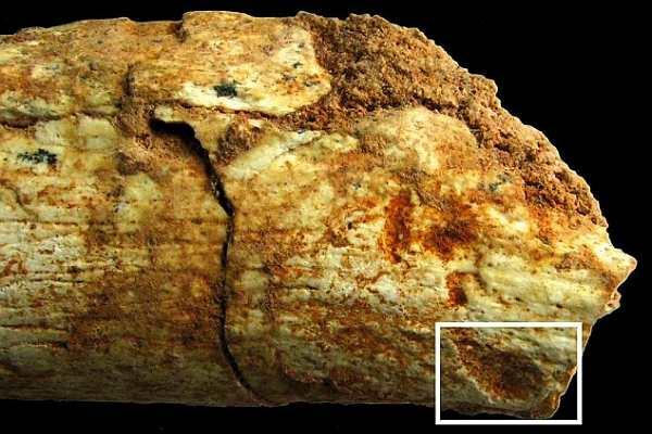 В Марокко найден скелет самого старого съеденного хищниками человека