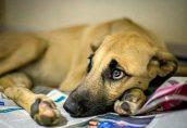 Ученые нашли две общие у людей и собак болезни