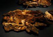 Самая старая одежда Арктики выставлена в музее Гренландии