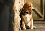 Дания удвоила наказание за жестокое обращение с животными
