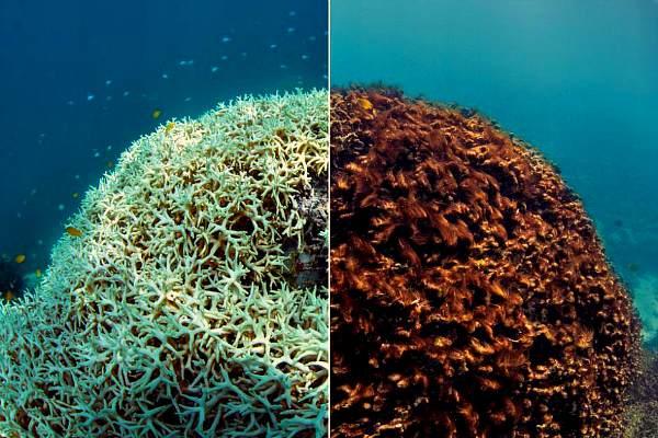 Мертвый и живой коралловый риф