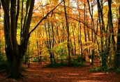 На окраине Лондона гибнет реликтовый лес Эппинг-Форест